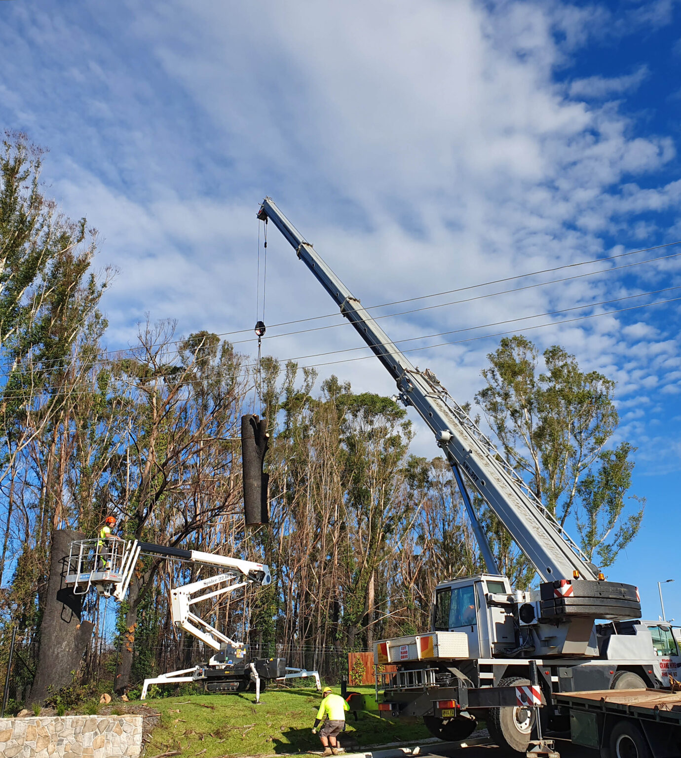 tree removal in ulladulla region, shoalhaven